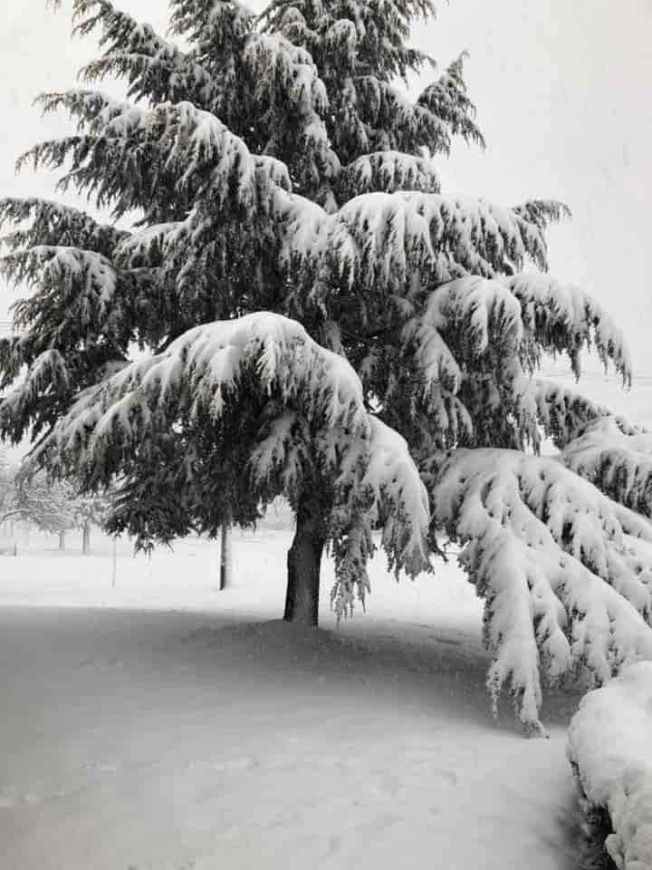 snowfall -august-22nd-2020 attraction near highlands motor inn - oberon - nsw